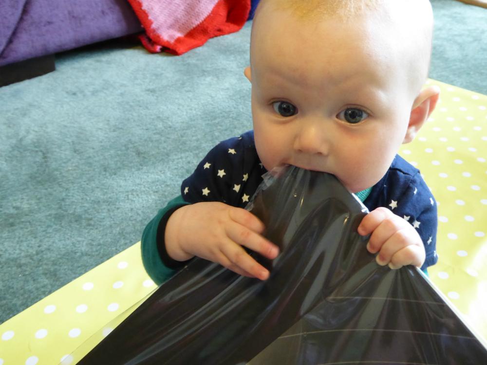Matilda Rooftops chewing on black cardboard