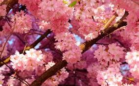 itt a tavasz...