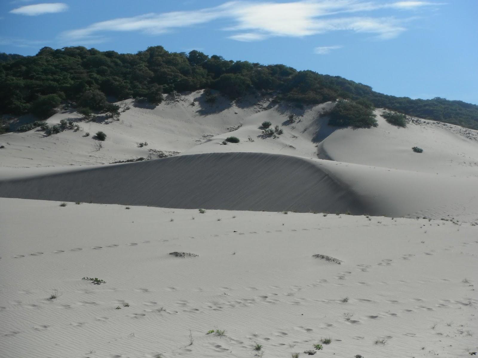 Ecoturismo m xico las dunas playa la bamba oaxaca for En zacatecas hay playa