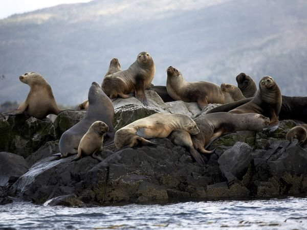 patagonia-wildlife-sealions