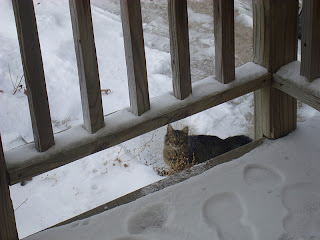 George Carlin Cat, Cat in the snow