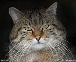 inilah kucing di rumah anda