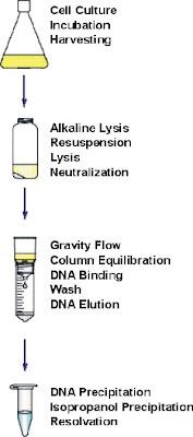 Plasmid prep process