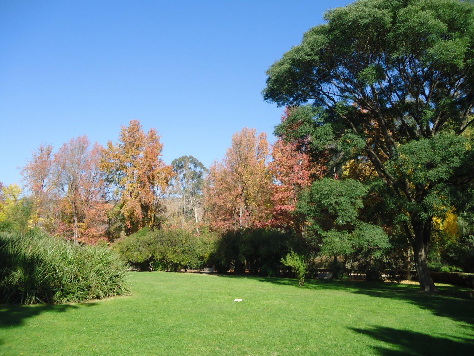 Desde el sur del mundo caminata oto al en el jard n for Jardin botanico vina