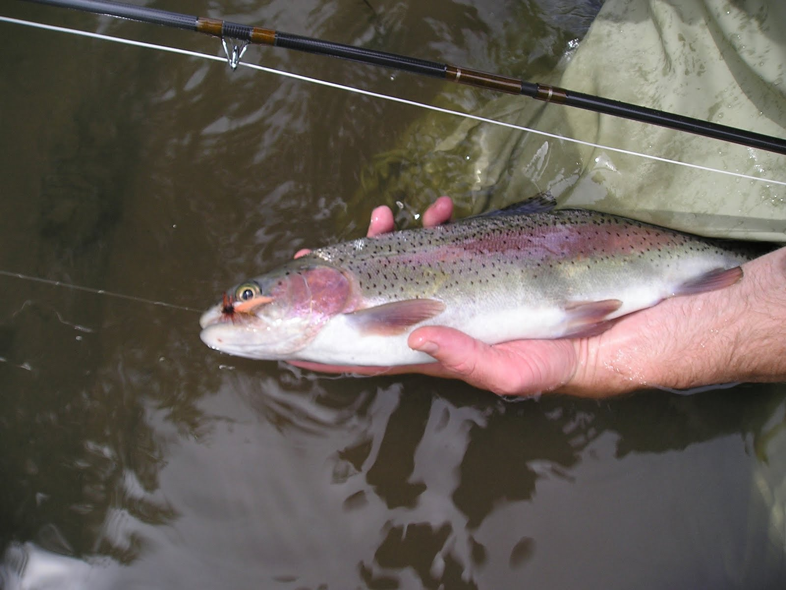 Brian marz 39 s fly fishing oregon blog lower deschutes for Trout fishing oregon