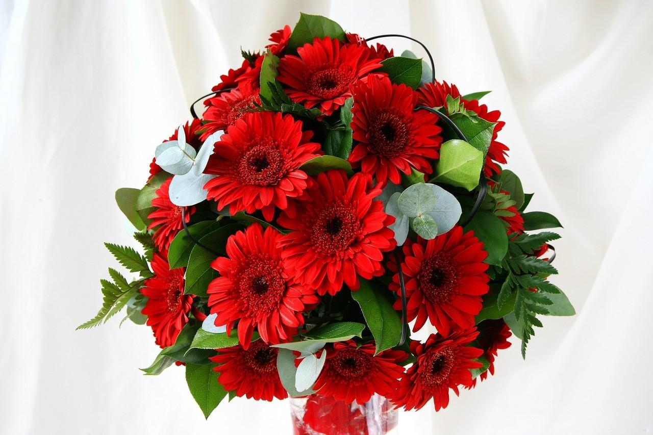 Pinterest daisy wedding bouquets gerbera daisy bouquet and daisy - Hd Pc Desktop Wallpapers Flower Wallpaper Hd For Laptop
