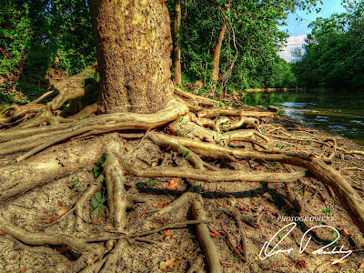 tree trees root roots rooted forest forests timber bark wood woods wild wilderness