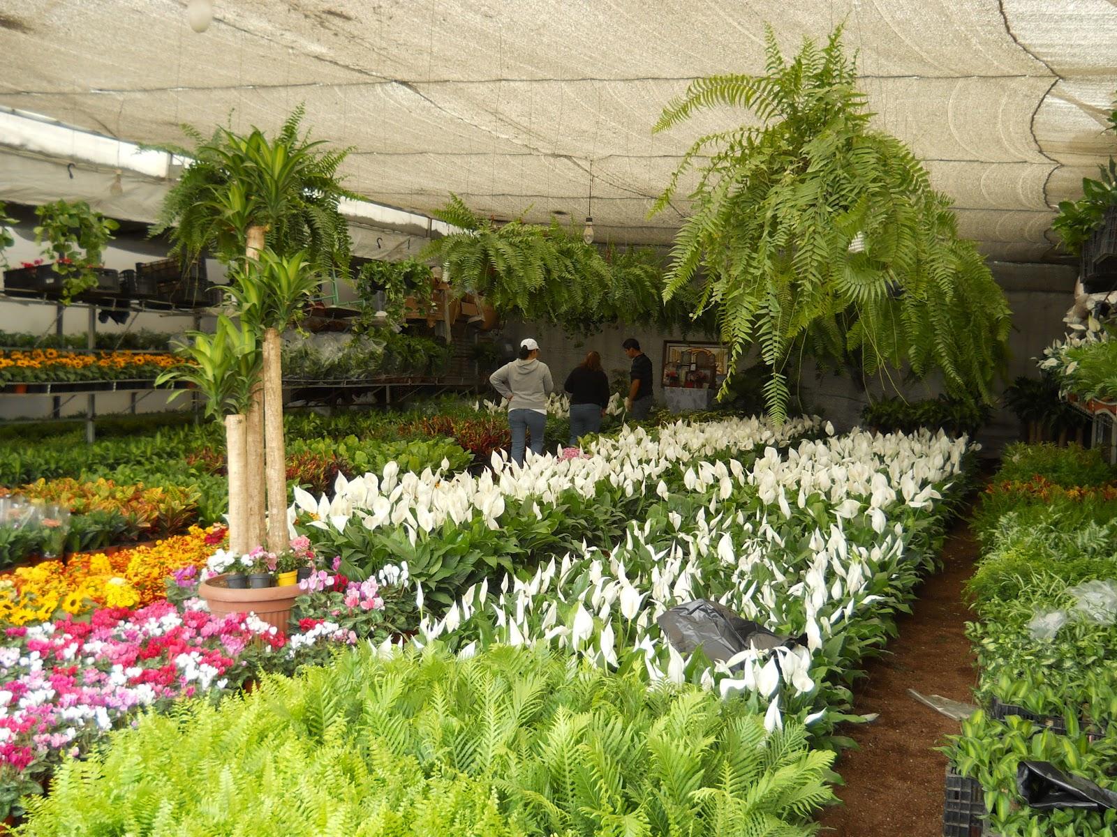 Traves as por el mundo madre selva un mercado de flores - Madreselva en maceta ...