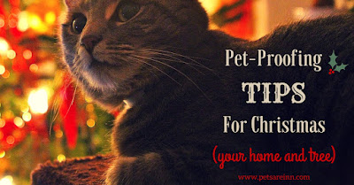 Pet-Proof Christmas