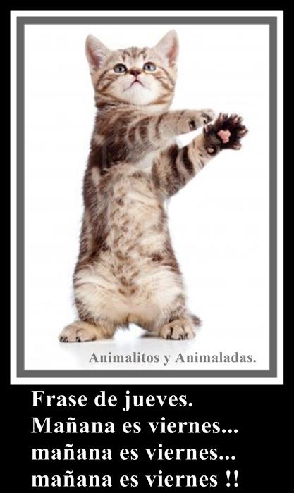 ¡¡MAÑANA ES VIERNES!! imagenes chistosas y graciosas