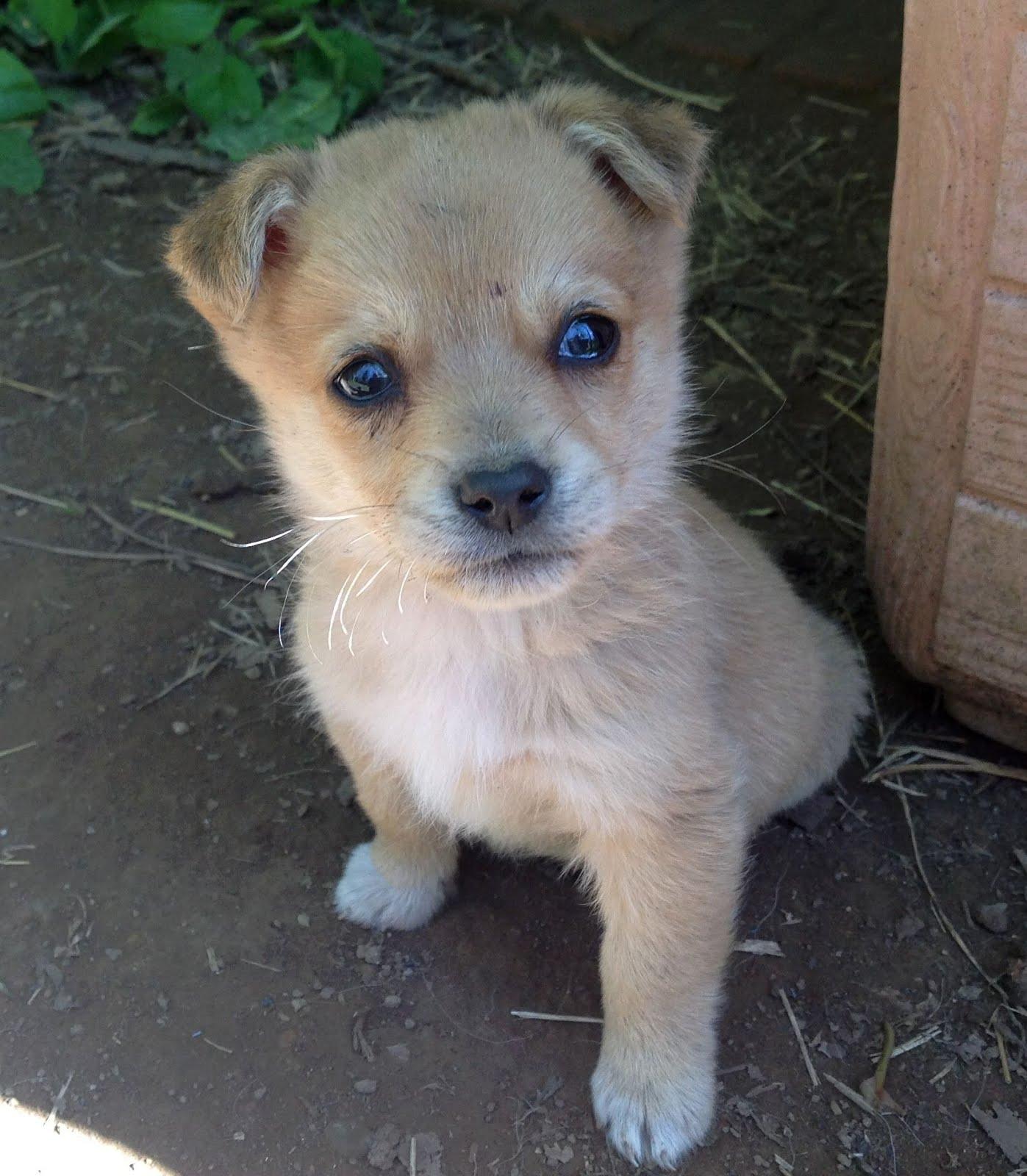 Cuoredicane meravigliosi cuccioli di piccola taglia for Nomi per cagnolini di piccola taglia