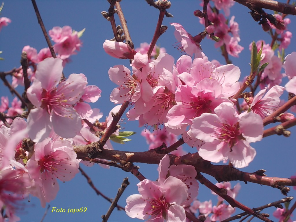 Farina asse mattarello e tanta verdura aprile 2013 - Immagini di fiori tedeschi ...