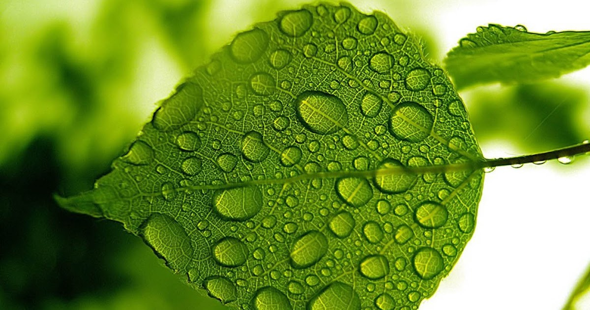 green leaf wallpaper image - photo #31