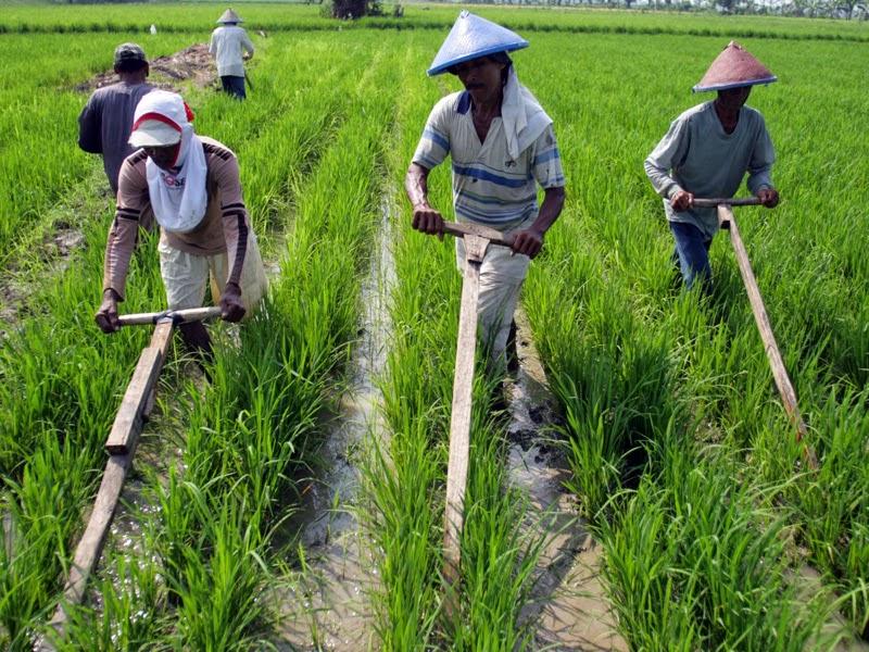 Kondisi Sosial Ekonomi Pertanian Di Indonesia Info Education