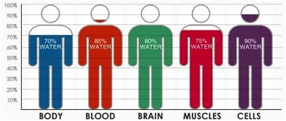 Andrew Yaun, D.C. Wellness Blog: Four Ridiculously Easy ...