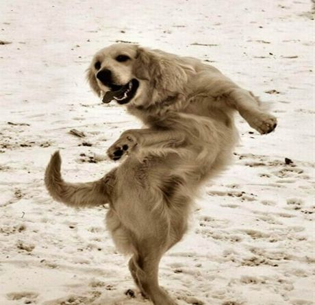 Funny Dog DancingFunny Cute Dog Pictures
