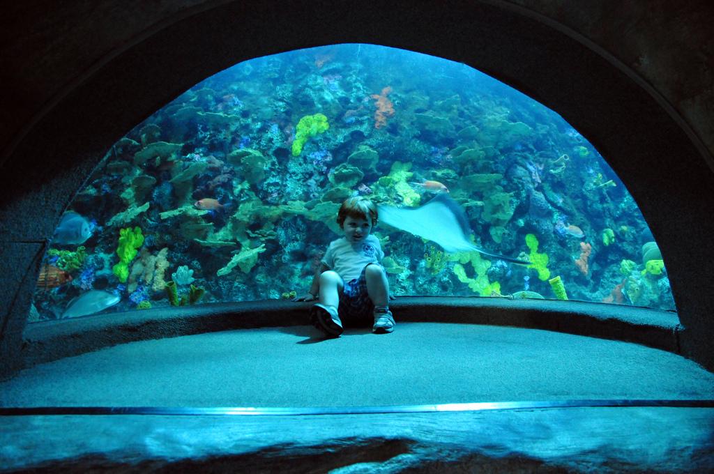 Aquarium Discounts Related Keywords & Suggestions - Tennessee Aquarium ...