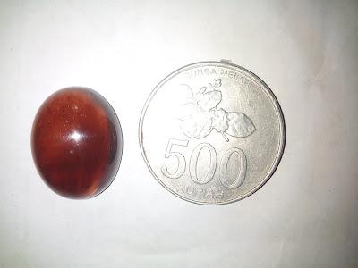 Mata Cincin Getah Katilayu GKJ005 Disandingkan Dengan Koin 500 Rupiah