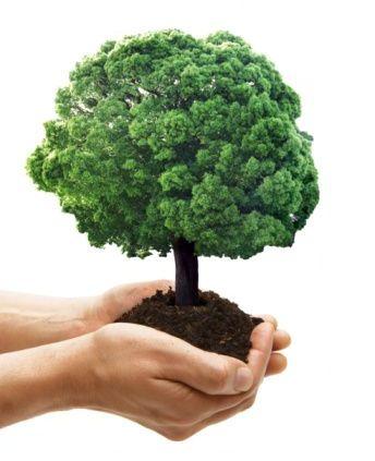 Peque os peruanos semana forestal nacional for Importancia de los viveros forestales