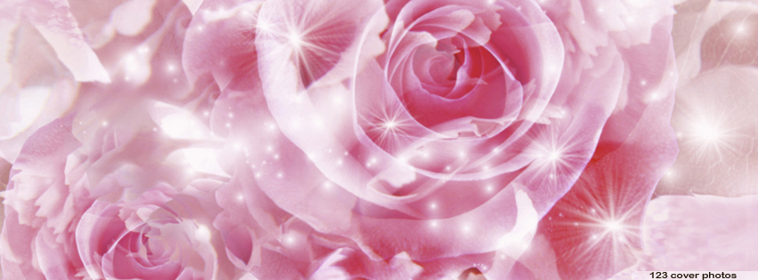 Rose Facebook Cover