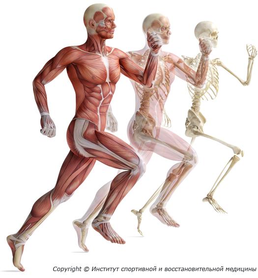 Anatomy and human biology