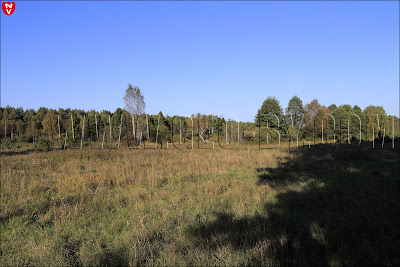 Налибокская пуща. На берегу реки Изледь