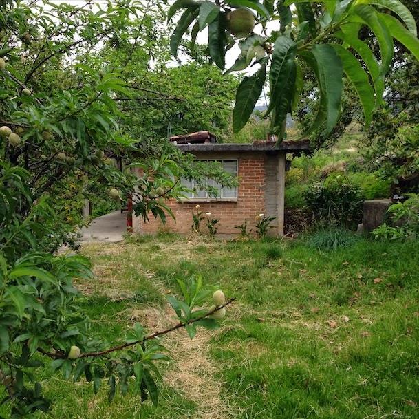 El cuexcomate los jardines econ micos for Jardines economicos