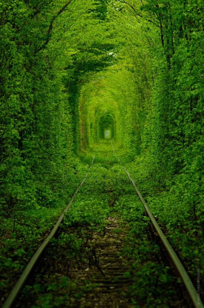 The tunnel of love beautiful place for couple in ukraine - Ramas de arboles ...