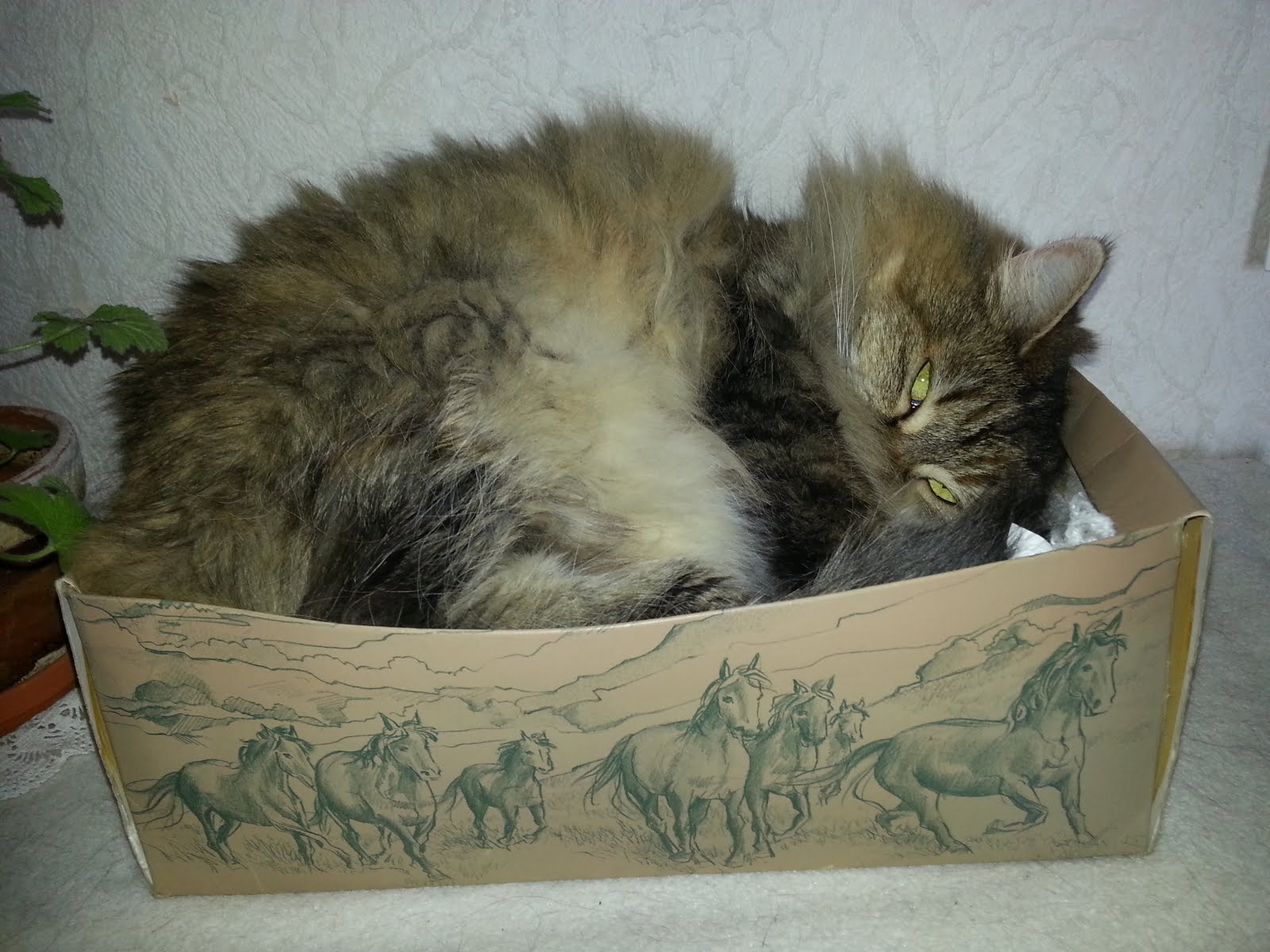 Min älskade katt Agnes