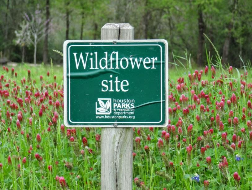 Houston Parks and Recreation Wildflower Site in Memorial Park