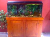 55 gallon fishtank and stand