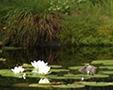 Støttegruppe for dammen vår