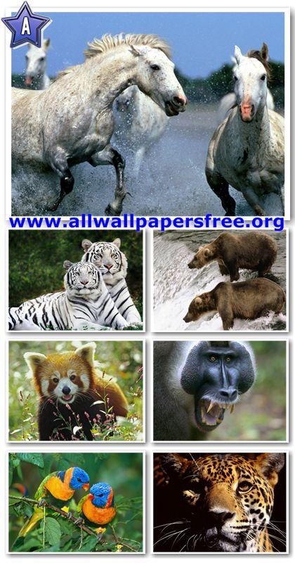 60 Amazing Animals Wallpapers 1280 X 1024 [Set 19]