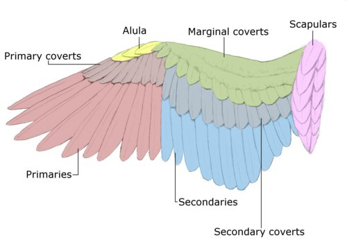 The Archaeology of Animal Bones  Bird Diagram bone names