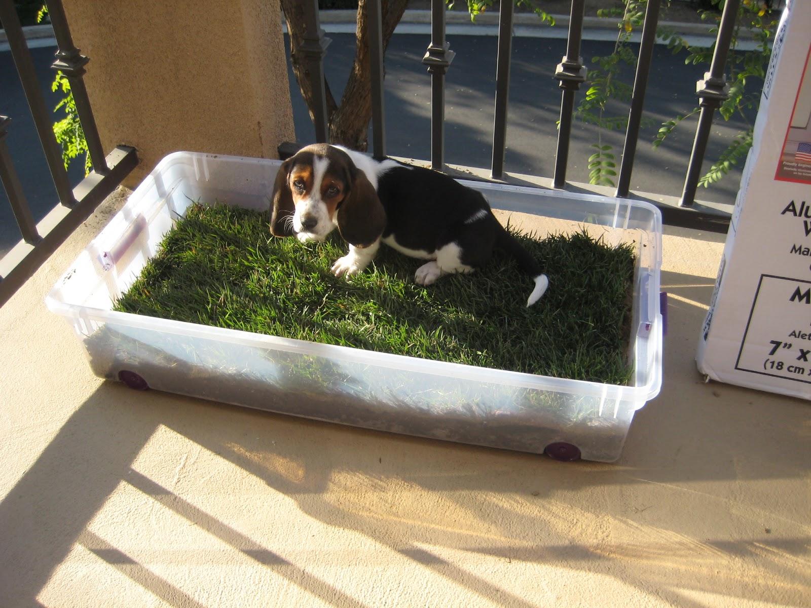Dog Bathroom Balcony Home Design