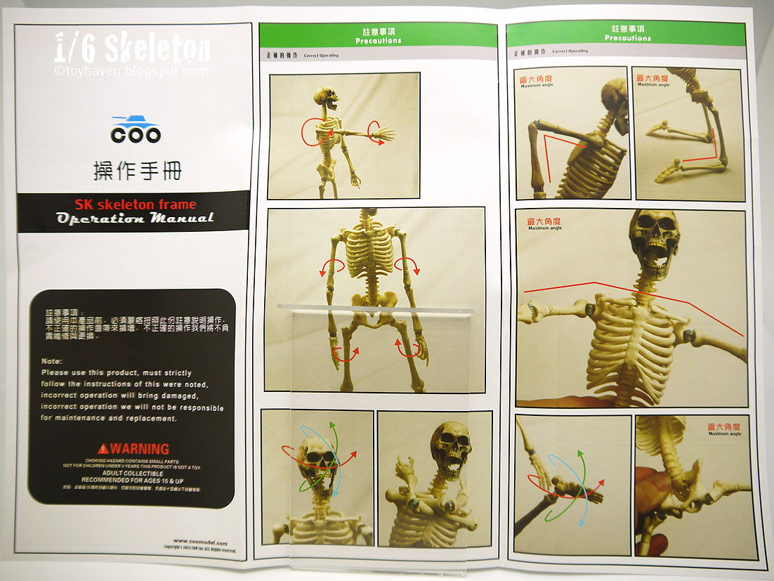 COO MODEL - 1:6 HUMAN SKELETON BODY 974_skeleton