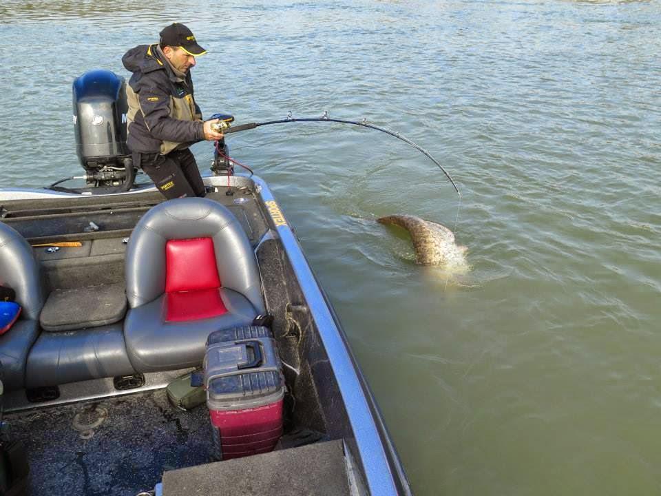 Dino Ferrari Catching The 280 Pound Catfish