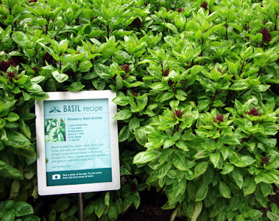 Basil Recipe at the Atlanta Botanical Garden