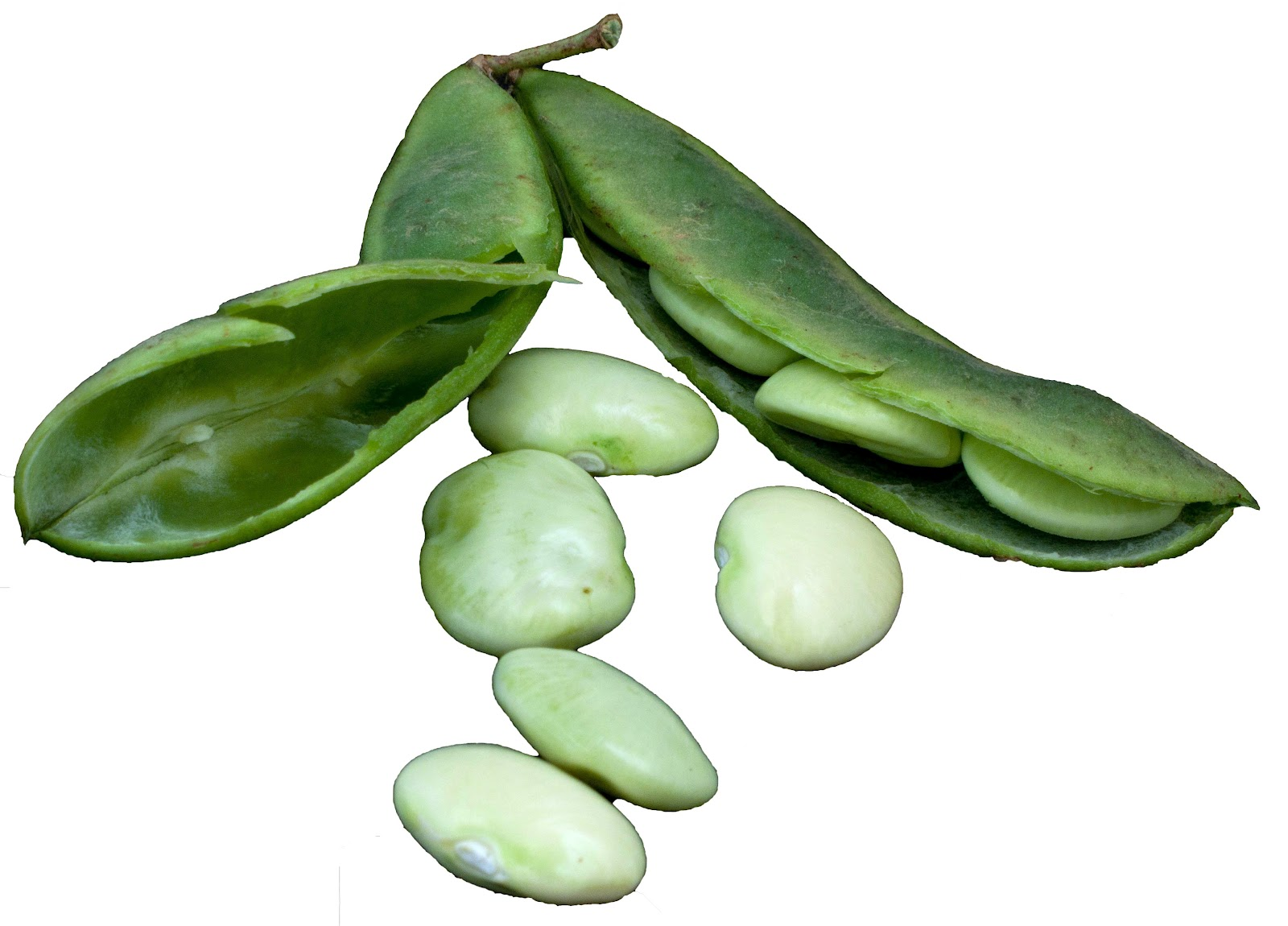 How to Prepare Lima Beans How to Prepare Lima Beans new foto