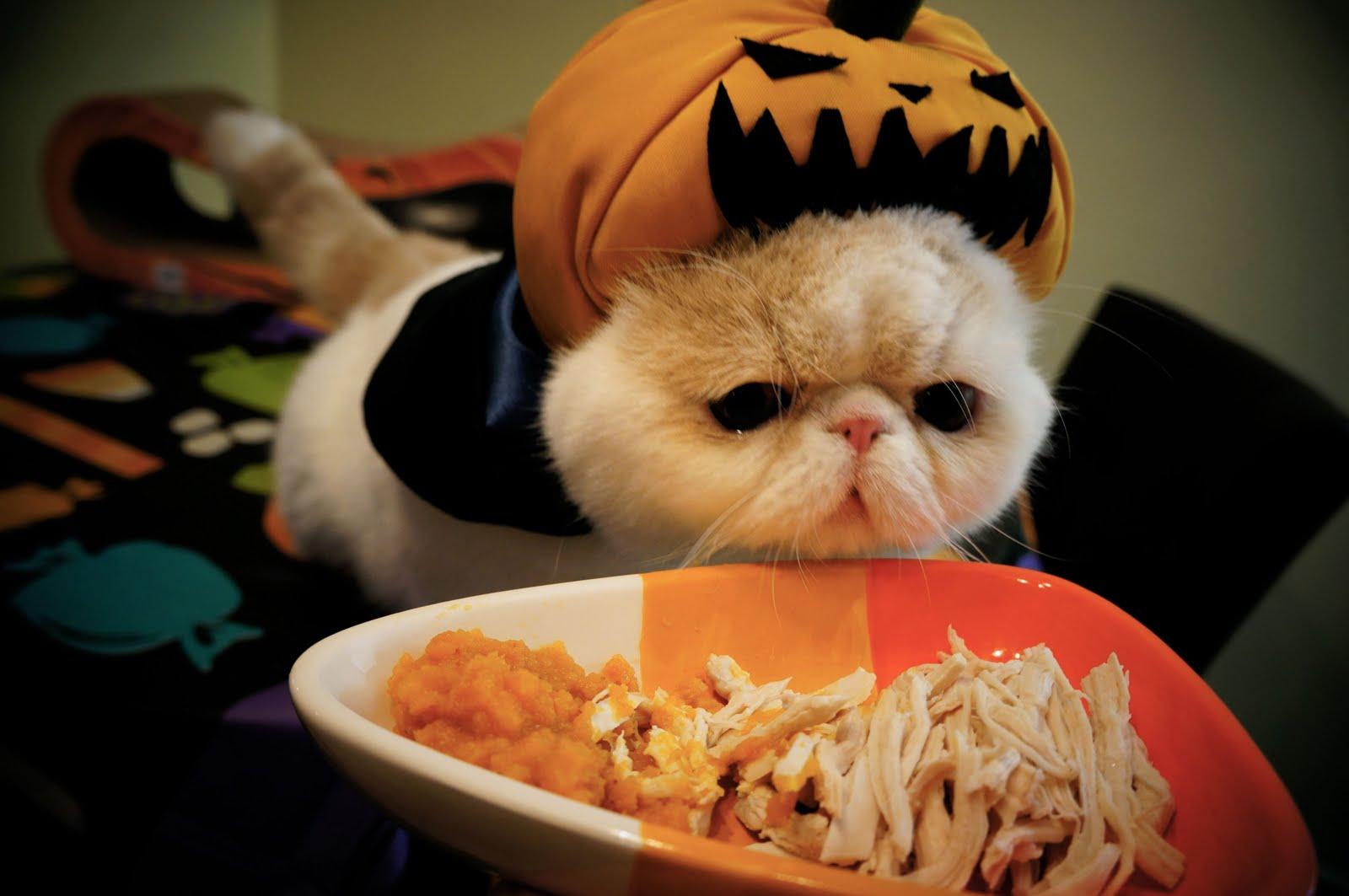 Pumpkin Vampire Kitty Sweetfurr