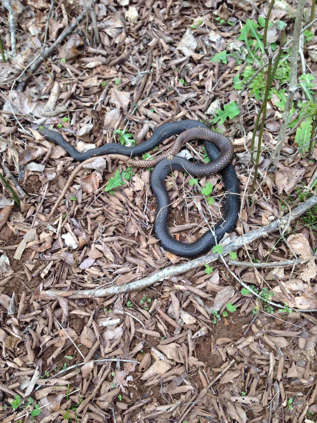 living alongside wildlife july 2015