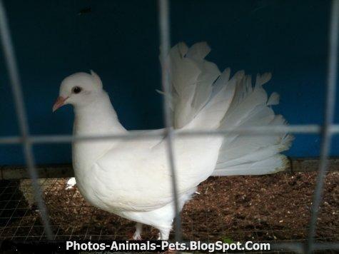 http://4.bp.blogspot.com/-LKMor29hTNw/TxROXlE_DoI/AAAAAAAACv4/TLiM95NNDbk/s1600/dove.jpg