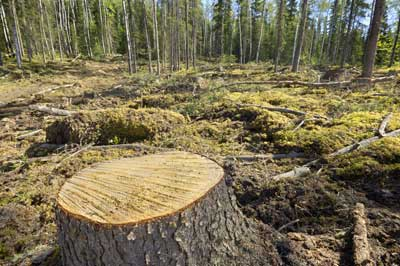 the hazards caused to the environment by cutting of trees Problem: loss of forests the loss of these trees results in fewer trees to absorb carbon dioxide, and the cut trees release the or other environmental hazards.