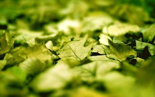 Super Macro Leaf Nature
