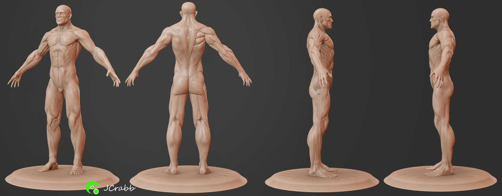 James Crabb- 3d Artist: Artist Anatomy Figurines