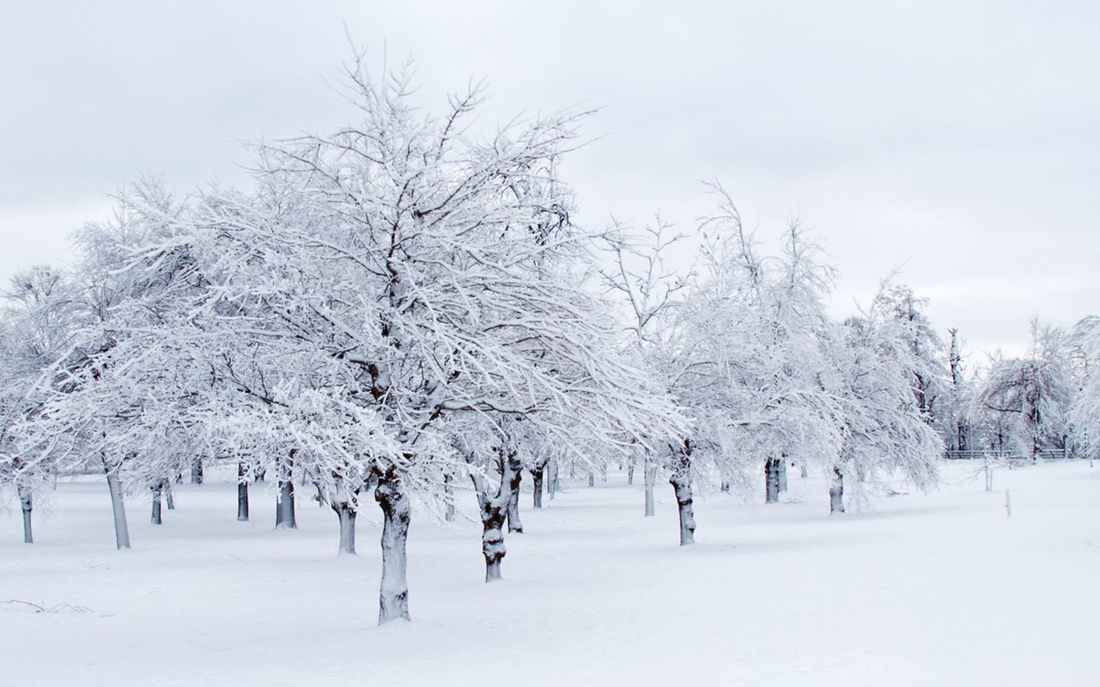 frozen trees widescreen wallpaper - photo #16