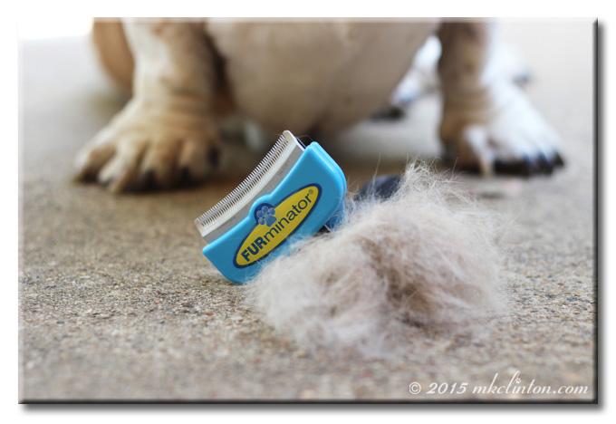 FURminator on top of pile of dog hair