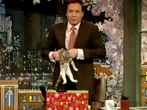 Jimmy Fallon and Cats