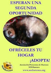 OFRÉCELES TU HOGAR