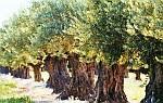 SOS για τα ελαιόδεντρα - το βακτήριο Xylella fastidiosa ήρθε στην Ευρώπη